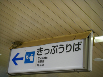 kaisei10.jpg
